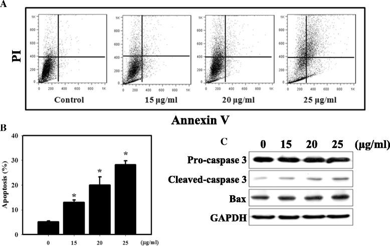 Measurement of apoptosis in HEK-293 cells treated with ZnO NPs. a Annexin V/PI staining in HEK-293 cells treated with ZnO NPs. The induction of apoptosis and necrosis was determined by flow cytometric analysis of Annexin V and PI staining. b Quantification of apoptotic cells with Annexin V-stained cells using flow cytometry. HEK-293 cells treated with different concentrations of ZnO NPs were assessed using Annexin V/PI staining. Cells were incubated with 0–25 μg/ml ZnO NPs for 24 h. * p
