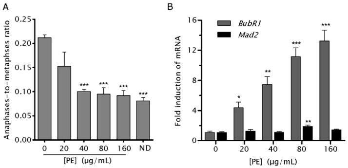 P. emblica  (PE) treatment activated the spindle assembly checkpoint (SAC) and upregulated the expression of budding uninhibited by benzimidazoles related 1 ( BubR1 ) in NCM460 cells. ( A ) NCM460 cells were treated with indicated doses of PE or 300 ng/mL nocodozale (ND, positive control) for 4 h followed by recovery for 1 h before cells were harvested for determining anaphase-to-metaphase ratio (AMR), an estimated measurement of SAC activity. AMR was obtained by dividing the total number of anaphase cells by the total number of metaphase cells counted for each PE concentration; ( B ) NCM460 cells were treated with indicated doses of PE for 72 h,  BubR1  (gray bars) and mitotic arrest deficient 2 ( Mad2 ; black bars) mRNA levels were measured by real-time quantitative polymerase chain reaction (PCR) after mRNA extraction and reserve transcription. Samples for each experimental group were run in triplicates and normalized to glyceraldehyde-3-phosphate dehydrogenase ( GAPDH ) mRNA levels. Results are expressed as fold increase in treated cells vs. untreated control. Values represent the means ± SEM of the fold induction taken from three independent experiments. *  p