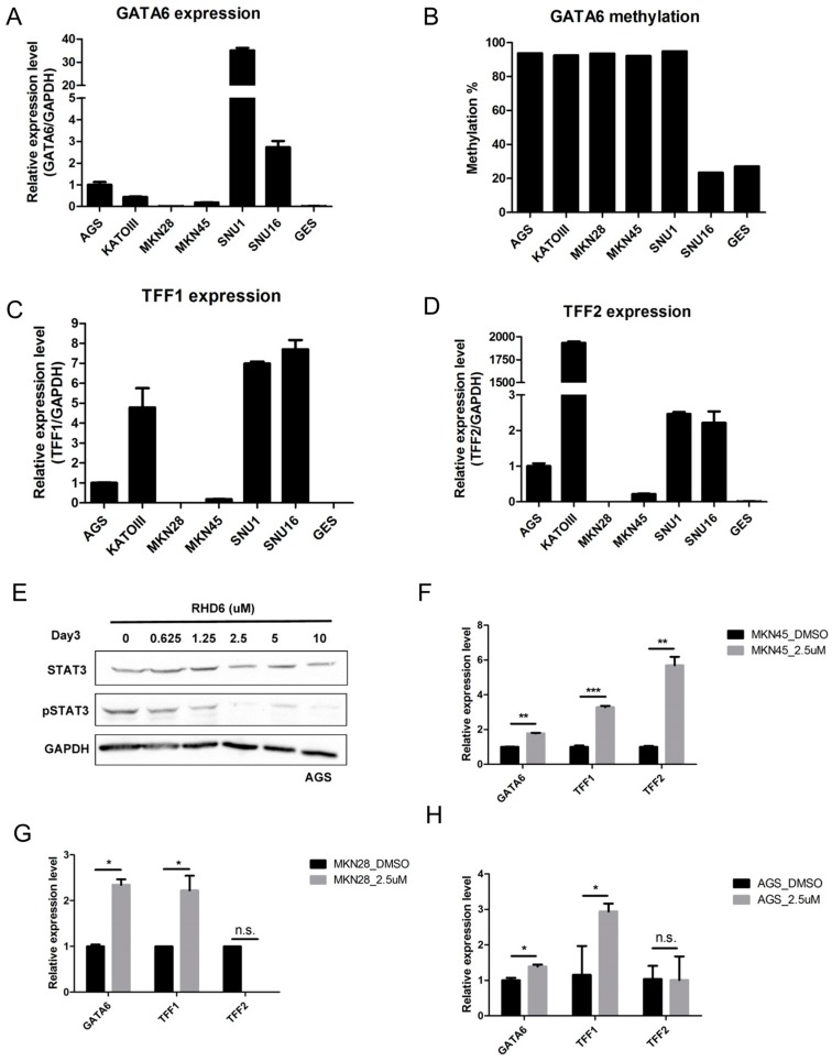 Epigenetic silencing of GATA6 through the activation of STAT3 suppresses expression of trefoil factors (TFF) 1 and 2 in gastric cancer: ( A ) Relative expression levels of GATA6 in immortalized gastric epithelial cells (GES) and gastric cancer cell lines as determined by RT-PCR; ( B ) Methylation level of the GATA6 promoter in gastric cancer cell lines, as determined by bisulfite pyrosequencing. Relative expression levels of ( C ) TFF1 and ( D ) TFF2 in the same gastric cancer cell lines, as determined by RT-PCR; ( E ) Western blot analysis showing the protein levels of STAT3 and phosphorylated STAT3 (pSTAT3) in AGS gastric cancer cells treated with various quantities of STAT3 inhibitor rhodium(III) complex 6 (RHD6). The protein level of glyceraldehyde 3-phosphate dehydrogenase (GAPDH) was used as a loading control. Relative expression levels of GATA6 , TFF1 , and TFF2 in ( F ) MKN45, ( G ) MKN28, and ( H ) AGS gastric cancer cells treated with dimethyl sulfoxide (DMSO) or 2.5 μm of RHD6. (*** p