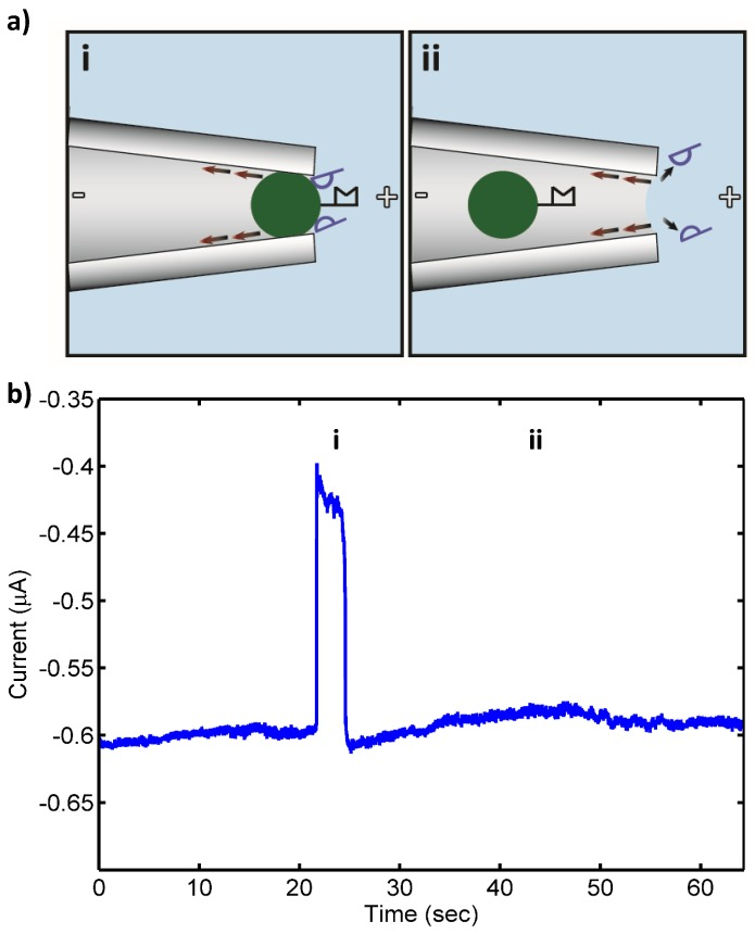 """( a ) Schematic of control (noncomplementary) Pseudomonas putida rRNA (blue, 10 pM) nonspecifically bound to bead-PNA probe conjugates under applied electric field in the drawn micropipette tip: (i) open pore state as bead with bound RNA approaches the micropipette tip (""""pore""""); (ii) transient blockade of the pore by the PNA-bead conjugate with nonspecifically bound noncomplementary RNA (blocked pore state); and (iii) relief of the pore blockade after the noncomplementary RNA of control bacteria was detached from the bead in the strong electric field at the micropipette tip and the bead is carried away from the pore by the opposing electroosmotic flow (red arrows) (open pore state). ( b ) Measured ionic current through the pore: (i) open pore current; (ii) current blockade by PNA-bead conjugates with bound RNA; and (iii) relief of the current blockade after the nonspecifically bound RNA was detached from the bead and the lack of tightly bound, complementary 16S rRNA resulted in the bead conjugate being swept from the pore by the opposing electroosmotic flow."""