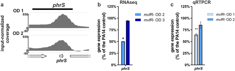 MvfR generates a positive feedback loop by binding to and inducing the small RNA PhrS. ( a ) ChIPseq analysis reveals that MvfR binds to phrS region. The black bar above the binding intensity plots represents the peak identified using SPP peak caller. ( b ) RNAseq analysis indicates that MvfR induces the expression of phrS . Light blue bar = mvfR mutant at OD 600nm 2, dark blue bar = mvfR mutant at OD 600nm 3. ( c ) qRTPCR analysis validates that MvfR induces the expression of phrS . Faint blue bar = mvfR mutant at OD 600nm 1, light blue bar = mvfR mutant at OD 600nm 2. Data show the average +/− SEM of 3 independent replicates. Statistical significance was assessed using one way ANOVA + Dunnett's post-test.
