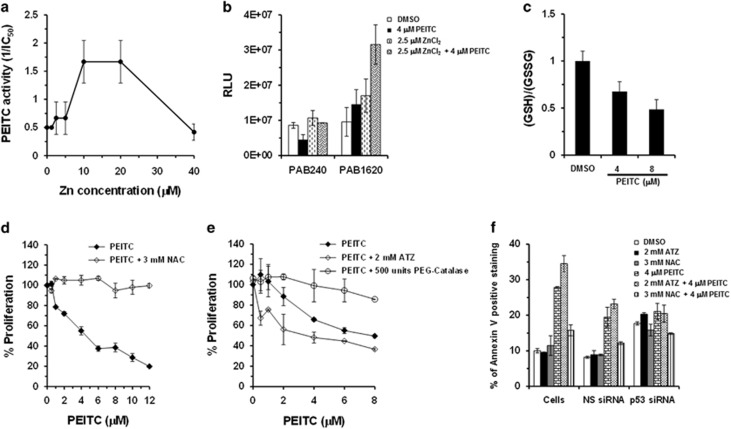 Effects of zinc and redox changes on PEITC-induced p53 R175 reactivation. ( a ) Effect of zinc on the activity of PEITC. SK-BR-3 cells were treated with PEITC, zinc or both. Percentage of cell proliferation was determined by the WST-1 assay. The PEITC activity is shown as 1/IC 50 for growth inhibition. ( b ) ELISA to determine the effect of zinc alone or zinc and PEITC on conformation of recombinant-purified GST-p53 R175H by using conformation-specific antibodies PAB240 (mutant-specific) and PAB1620 (WT-specific). ( c ) Effect of PEITC on the levels of reduced glutathione in SK-BR-3 cells. SK-BR-3 cells were treated with PEITC (4 or 8 μ M) or DMSO for 4 h. Ratio of reductant GSH and oxidative GSSG was then measured using the GSH/GSSG-Glo Glutathione Assay Kit. ( d ) Effect of NAC on PEITC activity. SK-BR-3 cells were treated with the indicated concentrations of PEITC or PEITC in combination with 3 mM NAC for 3 days. Percentage of cell proliferation was determined by the WST-1 assay. ( e ) SK-BR-3 cells were co-treated with the PEITC alone or in combination with 2 mM ATZ or 500 units PEG-Catalase for 3 days. Percentage of cell proliferation was determined by the WST-1 assay. ( f ) Effect on apoptosis. Untransfected (cells) or siRNA-transfected SK-BR-3 cells were treated with DMSO, ATZ, NAC or PEITC alone or PEITC in combination with ATZ or NAC for 3 days. Apoptosis was measured by Annexin-V staining using a BD LSRFORTESSA instrument