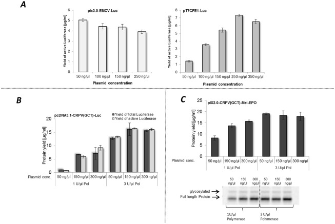 Evaluation of plasmid and T7 RNA polymerase concentration applied for CHO lysate based cell-free synthesis. A. Analysis of plasmid concentration of pIX3.0-EMCV-Luc and pT7CFE1-Luc used for cell-free protein synthesis. Protein yields of active luciferase were determined by standard luciferase assay B. Dependence of protein yield on plasmid and T7 RNA polymerase concentration during cell-free synthesis based on the template pcDNA3.1-CRPV(GCT)-Luc. Protein yields of de novo synthesized luciferase were detected and calculated by quantification of 14 C leucine labeled proteins and scintillation measurement. Luciferase assay was used for investigation of the amount of functional protein. Error bars represent standard deviations calculated from triplicate analysis. C Investigation of protein yield using pIX2.0-CRPV(GCT)-Mel-EPO DNA template. Variation of template DNA and T7 RNA polymerase concentration. Radio labeled proteins were analyzed by TCA precipitation followed by scintillation measurement (upper part C). Additionally, de novo synthesized proteins were visualized by autoradiography (lower part C).