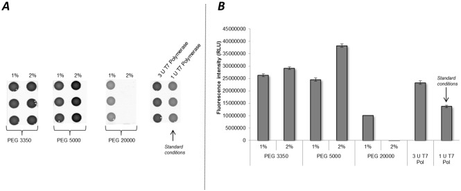 Influence of PEG on protein production in cell-free systems based on translationally active CHO lysate. Two concentrations (1%, 2%) of different PEG molecules (3350, 5000, 20000) were analyzed in cell-free protein synthesis reactions using pIX3.0-CRPV(GCT)-eYFP plasmid template. Translation reactions without the addition of PEG but with supplementation of 3 U/μl (increased concentration) and 1 U/μl (standard concentration) T7 RNA polymerase served as control reactions A . Fluorescence signals of synthesized eYFP proteins were detected by fluorescence imaging on μ-Ibidi slides using the Typhoon Trio Plus Imager. B . Quantification of fluorescence signals was accomplished by using Image Quant TL Array analysis software. Error bars show standard deviations calculated from triplicate analysis.