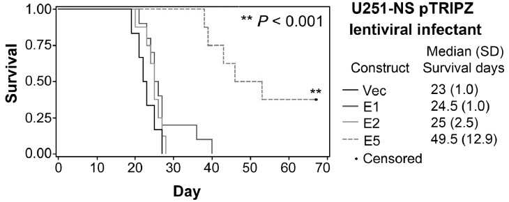 Intracranial (i.c.) xenograft formation assay of U251-NS Kaplan-Meier survival curves were was plotted from overall survivals of mice following i.c. implantation of U251-NS infectants of <t>pTRIPZ-lentiviral</t> constructs of vector, wild-type and variants of <t>EFEMP1.</t>