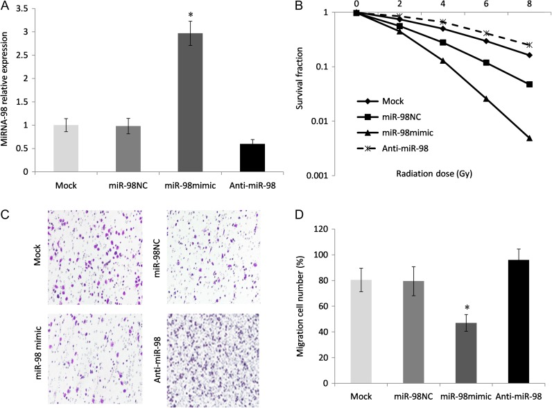 Upregulation of miRNA-98 led to increased radiation sensitivity in radioresistant ESCC cells. (A) EC9706R cells were transfected with a miRNA-98 precursor vector, anti-miR-98 or a control vector using Lipofectamine. miRNA-98 expression was verified by qRT-PCR; U6 was chosen as an internal control. Asterisk indicates statistical significance ( P