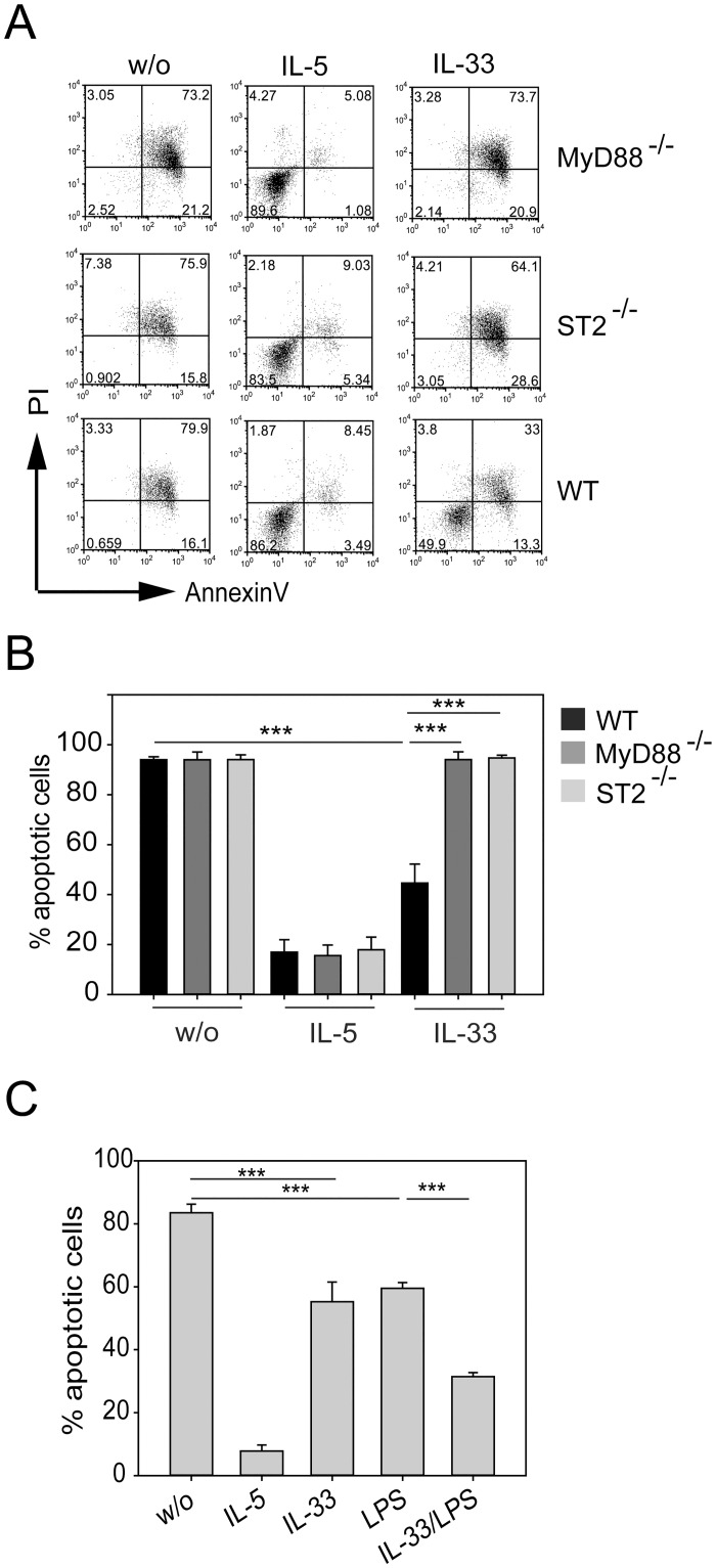 IL-33 mediates eosinophil survival that depends on ST2 and MyD88. BMDE from wild-type (WT), ST2-deficient (ST2 -/- ) and MyD88-deficient (MyD88 -/- ) mice were cultured in presence of 10 ng/ml IL-5 or IL-33 or were left untreated for 72 hours. Cells were harvested and analyzed by flow cytometry to detect apoptotic cells. (A) Dot plots show representative AnnexinV/PI stainings for each experimental group. (B) Bars show the mean + SEM of apoptotic cells from indicated mice. Data are pooled from two independent experiments (n = 5–6; *** p