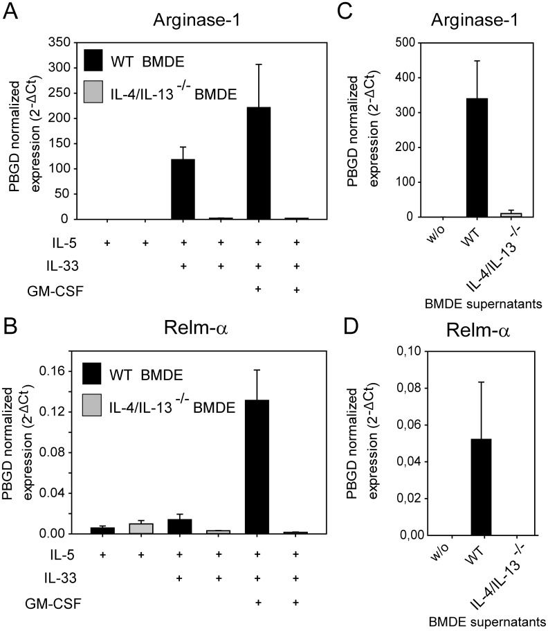 IL-33 activated eosinophils mediate alternative activation of macrophages. (A) and (B) BMDM generated from wild-type BALB/c mice were co-cultured with BMDE from either wild-type (black bars) or IL-4/IL-13-deficient BALB/c mice (grey bars) for 24 hours in the presence of the indicated cytokines. Quantitative RT- PCR was performed to analyze Relm-α and Arginase-1 expression as established markers for alternative activation of macrophages. Data are presented as normalized expression to PBGD. Bars show the mean + SD (n = 3) from one of three independent experiments with similar results. (C) and (D) only supernatants of IL-5+IL-33+GM-CSF stimulated BMDE from WT (black bars) or IL-4/IL-13-deficient mice (grey bars) were added to BMDM for 24 hours before quantitative RT-PCR was performed. Bars show the mean + SD (n = 3) from one experiment.