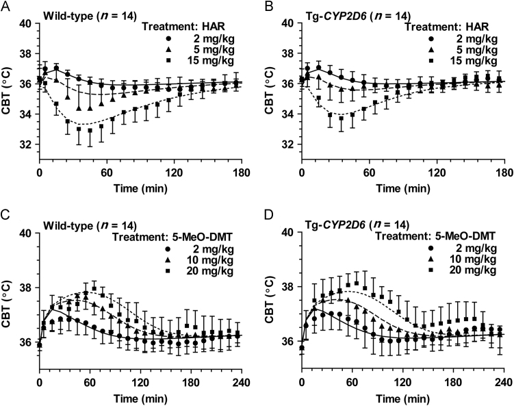Model estimation of the hypothermia (A and B) and hyperthermia (C and D) in mice induced by harmaline and 5-MeO-DMT alone, respectively. Harmaline or 5-MeO-DMT was administered i.p. to wild-type and Tg- CYP2D6 mice ( n =14 in each group) at 0 min. The solid (─), dashed (- -) and dotted (··) lines represent the fitted data with the ascending doses of respective drugs, which were obtained from simultaneous estimation using the PK/PD model shown in Fig. 1 .