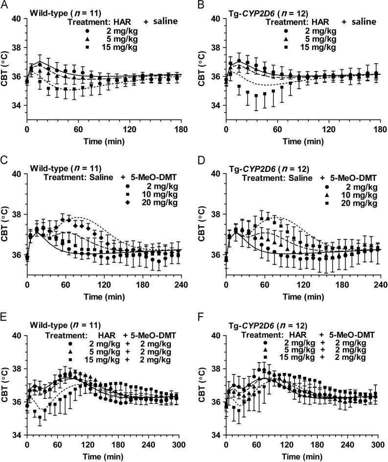 Model estimation of the thermomodulatory effects in mice co-administered with harmaline and 5-MeO-DMT, including harmaline plus vehicle (A and B), vehicle plus 5-MeO-DMT (C and D), and various doses of harmaline plus 2 mg/kg 5-MeO-DMT (E and F) in wild-type ( n =11) and Tg- CYP2D6 ( n =12) mice. Harmaline and 5-MeO-DMT or corresponding vehicle were administered i.p. at 0 and 15 min, respectively. The solid (─), dashed (- -) and dotted (··) lines represent the fitted data with the ascending doses of respective drugs, which were obtained from simultaneous estimation using the PK/PD model shown in Fig. 1 .