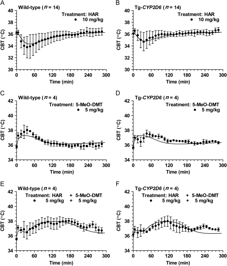 Comparison of experimental and model predicted CBT profiles in wild-type and Tg- CYP2D6 mice treated with 10 mg/kg harmaline alone (A and B; n =14 in each group), 5 mg/kg <t>5-MeO-DMT</t> alone (C and D; n =4 in each group), and 5 mg/kg harmaline plus 5 mg/kg 5-MeO-DMT (E and F; n =4 in each group). For single dose study, drug was dosed i.p. at 0 min. For DDI study, harmaline and 5-MeO-DMT were dosed i.p. at 0 and 15 min, respectively. The solid (─) lines represent the predicted data that were obtained from the developed PK/PD model shown in Fig. 1 .