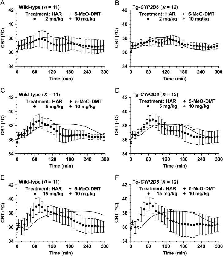 Comparison of experimental and model simulated CBT profiles in wild-type ( n =11) and Tg- CYP2D6 ( n =12) mice treated with 2 (A and B), 5 (C and D) or 15 mg/kg (E and F) harmaline plus 10 mg/kg 5-MeO-DMT. Harmaline and 5-MeO-DMT were dosed i.p. at 0 and 15 min, respectively. The solid (─) lines represent the predicted data that were obtained from the developed PK/PD model shown in Fig. 1 .
