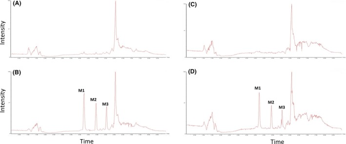 High‐performance liquid chromatography‐mass spectrometer ( HPLC ‐ MS ) chromatograms of oxidation metabolites of <t>Omeprazole</t> in suspension cultures of fresh (A = 0 min and B = 30 min) and recovered cryopreserved (C = 0 min and D = 30 min) equine hepatocytes. The ratio between the peak areas of M1, M2, and M3 was 2:1:1, respectively, in both fresh and cryopreserved hepatocytes.