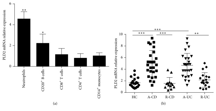 PLD2 is mainly expressed in neutrophils. (a) Expression of PLD2 in different subsets of immune cells. Peripheral neutrophils, CD20 + B cells, CD8 + T cells, CD4 + T cells, and CD14 + monocytes (1 × 10 6 ) were isolated from healthy donors ( n = 10), and expression of PLD2 was detected by qRT-PCR. ∗ p