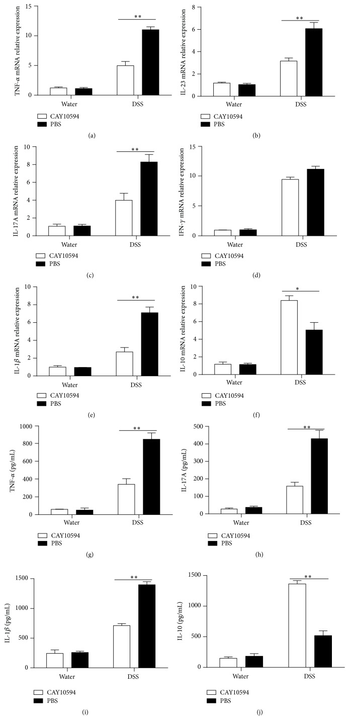 Cytokines profiles in colonic tissues from DSS-induced colitis mice after PLD2 inhibition. ((a)–(f)) Colonic tissues were obtained from mice on day 10 after DSS-induced colitis, and total RNA was extracted to detect mRNA levels of various cytokines by qRT-PCR. ∗ p