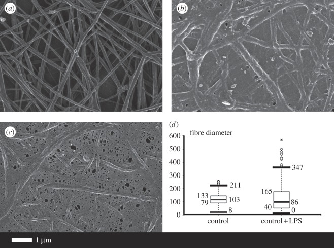 The effect of 0.2 ng l −1 O111:B4 LPS on the morphology of fibrin fibres in the platelet-poor plasma (PPP) of healthy individuals (with added thrombin). ( a ) Healthy fibres; ( b,c ) PPP with added LPS. ( d ) Fibre distribution of the control fibres and of controls with added LPS of 30 individuals. Note: in samples with added LPS, there were areas of matted layers with no visible fibres to measure. Fibres were measured using ImageJ as described in Material and methods.