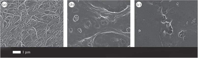 ( a ) Purified fibrinogen with added thrombin but no LPS; ( b ) purified fibrinogen with added O111:B4 LPS (30 s exposure) and 0.2 ng l −1 LPS; ( c ) as panel ( b ) but 10 min exposure.