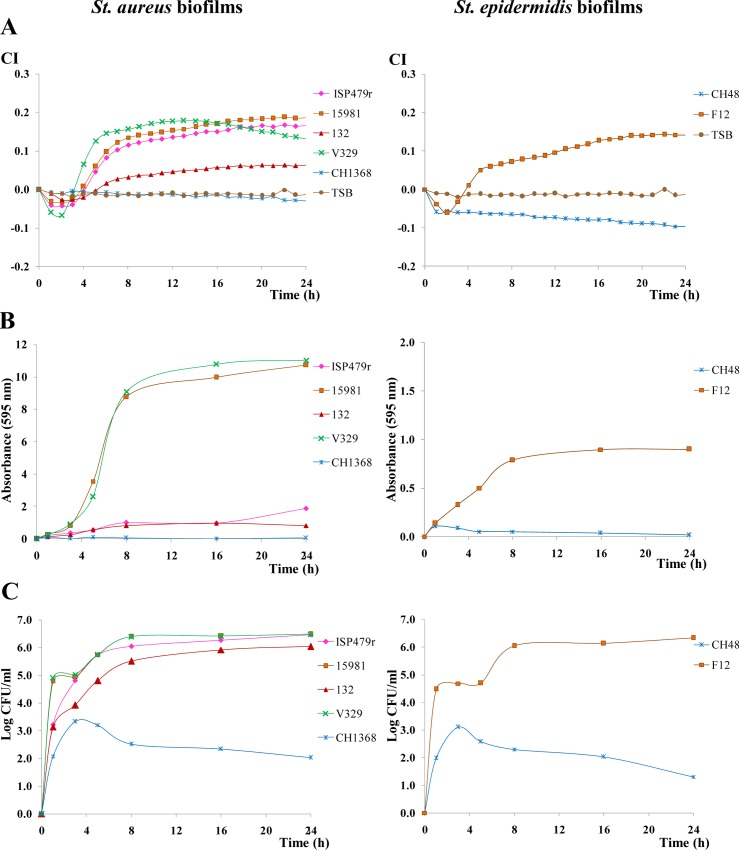 Variation in the cell index (CI) during biofilm formation at 37°C of different S . aureus and S . epidermidis biofilm producers (ISP479r, 15981, 132 or V320 and F12, respectively) and no-biofilm producers (CH1368 and CH48, respectively). TSB+0.25% glucose was the culture medium used in the experiment ( A ). Absorbance (595 nm) measured after crystal violet staining of samples collected at different times during the biofilm formation in E-plates of the strains under study ( B ). Counts (Log CFU/ml) of cells collected from the biofilms formed in the E-plates by the strains under study ( C ). Statistical differences among strains at three sampling points (8, 16 and 24 h) are collected in S1 Table , which also shows representative mean and SD values.
