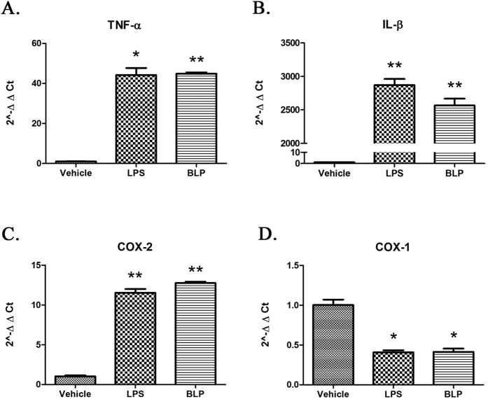 Induction of proinflammatory genes by BLP in RAW264.7 cells. RAW264.7 cells were cultured and maintained as described in 'Methods'. 5 × 10 5 cells/ml were treated for 2 hours with vehicle, LPS (100 ng/ml) or BLP (100 ng/ml). All the treatments were carried out in triplicates. After incubation, total RNA was extracted and real-time PCR analysis was carried out for ( A ) TNF-α, ( B ) IL-1β, ( C ) COX-2 and ( D ) COX-1. The results are represented in terms of 2 −∆∆CT with respect to GAPDH and the data shown are mean ± SEM (n = 3). *p ≤ 0.01; **p ≤ 0.001 when compared with the vehicle treated group. The results are representative of two independent experiments.