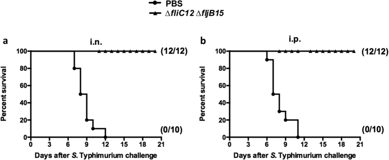Survival in vaccinated mice after oral challenge with wild-type S. Typhimurium. Intranasal ( a ) and intraperitoneal ( b ) immunization with OMVs derived from S. Typhimurium flagellin-deficient mutants provided protection against oral challenge with wild-type S . Typhimurium in BALB/c mice. In total, 10 (control) or 12 (vaccinated) mice per group were immunized twice at 4-week intervals with the indicated OMVs. The mice were challenged with 10 9 CFU of S. Typhimurium at 5 weeks after the boost immunization. Mortality was monitored for 3 weeks after challenge. The numbers in parentheses refer to the number of surviving mice and the total number of mice per group. All vaccine groups were significantly different from the PBS control group ( P