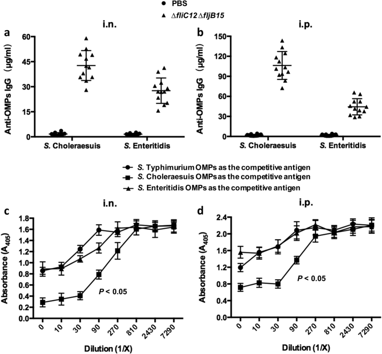 Cross-reactivity of OMVs derived from flagellin-deficient S. Typhimurium mutant strain. Cross-reactivity of IgG in sera obtained from intranasally ( a ) or intraperitoneally ( b ) immunized mice against OMPs from other serotypes of Salmonella , including S. Choleraesuis and S. Enteritidis, to analyse OMV-induced cross-protection. Each vaccinated group consisted of 12 mice, and the PBS group consisted of 10 mice. The cross-reactivity data represent the exact concentration of total IgG antibodies in the sera, as quantified using the corresponding standard curve using individual sera obtained from mice immunized intranasally or intraperitoneally with OMVs derived from S. Typhimurium. The error bars represent variations between triplicate wells. Competitive ELISA to determine the cross-reactivity of OMVs derived from flagellin-deficient mutant against heterologous Salmonella. OMPs isolated from S. Typhimurium were incubated into plates as coating antigen. OMPs from S. Choleraesuis, S. Enteritidis or S. Typhimurium (control) as the competitive antigen diluted from 1/10 to 1/ 7,290 were incubated in wells. The sera were obtained from mice (n = 10 or 12) immunized intranasally ( c ) or intraperitoneally ( d ) with OMVs at 8 weeks after the first immunization. The error bars represent variations from triplicate wells. P