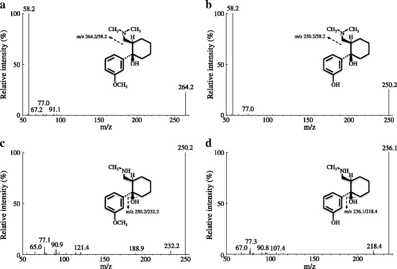 Mass spectra of tramadol ( a ), O -desmethylate ( b ), N -desmethylate ( c ), and N,O -didesmethylate ( d ). A mass-to-charge ( m/z ) of 264.2/58.2 was monitored for tramadol, 250.2/58.2 for O -desmethylate, 250.2/232.2 for N -desmethylate, and 236.1/218.4 for N,O -didesmethylate