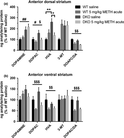 Acute tissue content levels of dopamine and its metabolites measured in the (a) anterior dorsal striatum and (b) anterior ventral striatum ( NA c) of wild‐type mice ( WT ) and DKO mice ( n = 6–9/group). Tissues were collected 30 min following an acute saline or methamphetamine ( METH , 5 mg/kg) injection. Data reported as average percentage change over WT saline‐treated controls and independent two‐way anova analysis was conducted for each analyte. $ p > 0.05, $$ p