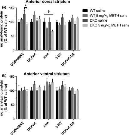 Sensitized tissue content levels of dopamine and its metabolites measured in the (a) anterior dorsal striatum and (b) anterior ventral striatum ( NA c) of wild‐type mice ( WT ) and DKO mice ( n = 4–8/group). Tissues were collected 24 h following a challenge injection of saline or methamphetamine ( METH , 5 mg/kg) on day 13 of the locomotor sensitization procedure. Data reported as average percentage change over WT saline‐treated controls and independent two‐way anova analysis was conducted for each analyte. $ p > 0.05, main effect of METH treatment; * p