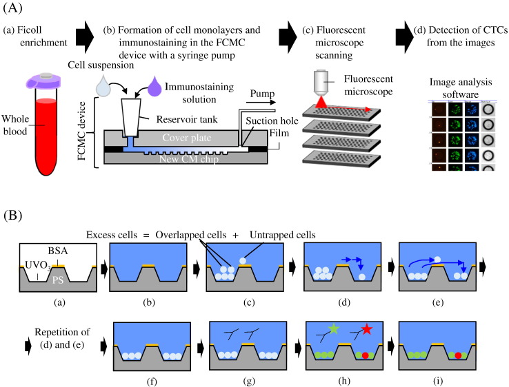 "Workflow of sample processing and movement of cells in the FCMC device. (A) Workflow of sample processing and CTC detection. (a) Blood sample collection and enrichment using Ficoll-Paque PLUS. (b) The cell suspension is loaded into the FCMC device. The cells form monolayers in the microchambers and are immunostained by using a syringe pump. (c) All microchambers are scanned using a fluorescent microscope. (d) CTC are detected from the fluorescent images. (B) Movement of cells in the FCMC device. (a) The new CM chip, which is made from polystyrene (PS), is cleaned with UV ozone and coated with BSA. (b) The FCMC device is washed with PBS. (c) A cell suspension (68 uL) that is equivalent to 0.4 mL of blood is loaded into one FCMC device. (d) After ""Suction for Trapping"", untrapped cells move into downstream microchambers and settle down on the bottom of these microchambers. The blue arrows indicate flow. (e) After ""Suction for Monolayer"", overlapped cells are discharged from microchambers and move to the outside of microchambers or to the inside of downstream microchambers. (f) After repetitions of (d) and (e), all cells are trapped in a monolayer. (g), (h), (i) Immunostaining solutions are loaded, incubated and washed."
