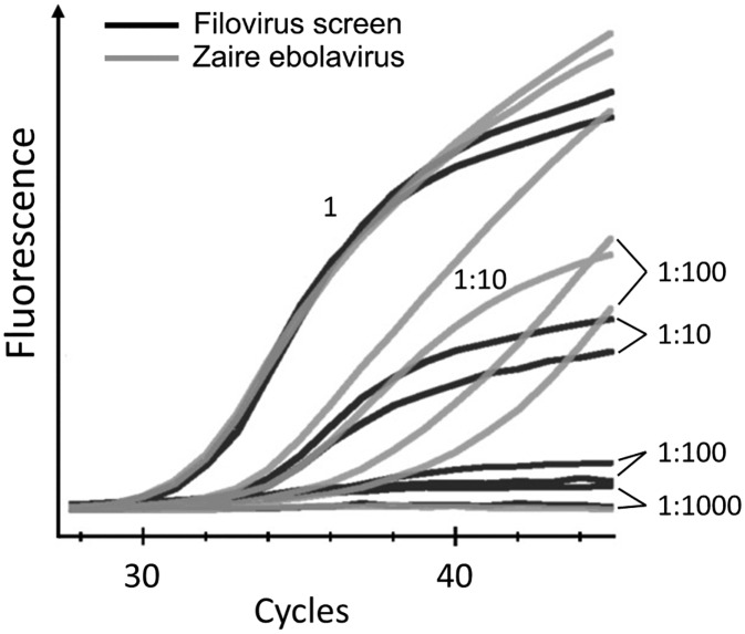 Fluorescence signal intensity determined by real-time reverse transcription–polymerase chain reaction analysis, using Zaire Ebolavirus and Filovirus Screen kits. Dilutions of Ebola virus (EBOV) RNA were assayed in parallel with Zaire Ebolavirus and Filovirus Screen kits on the CFX96 instrument. At low RNA concentrations, the fluorescence signal-to-noise ratio for the Zaire Ebolavirus kit is improved, compared with that for the Filovirus Screen kit.