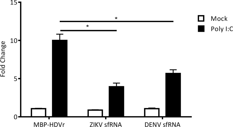 Activation of the IFN-β promoter by poly I:C in cells over expressing ZIKV sfRNA. A549 cells were co-transfected with either pDEST-DENV-3'UTR, pDEST-ZIKV PE243-3'UTR or pDEST40-MBP (sfRNA over-expression plasmids and MBP-HDVr control, respectively) and p125Luc IFN-β promoter reporter (expressing Firefly luciferase) along with pRL-CMV (internal control, expressing Renilla luciferase). The IFN-β promoter was stimulated by transfecting poly I:C 24 h after the primary transfection. The relative luciferase activity (Firefly/ Renilla ) was analyzed at 24 h following the second transfection. The mean with standard error is shown for three independent experiments performed in triplicate; values of independent experiments were used for analysis. The data were normalized to cells transfected with pDEST40-MBP without any poly I:C treatment. Asterisk (*) indicates significance (2-way ANOVA, p