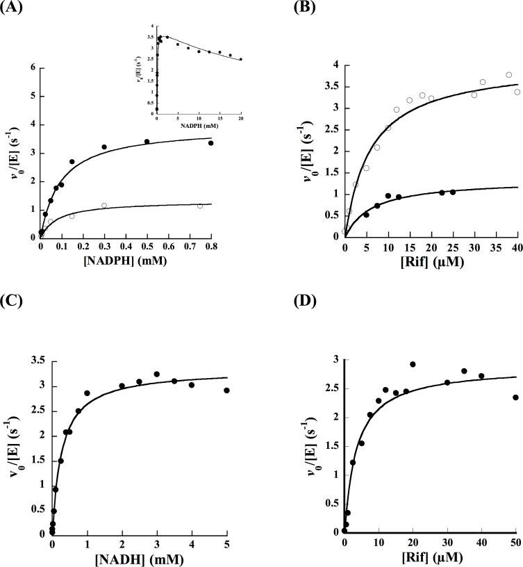 Steady-state kinetics of oxygen consumption compared to HPLC analysis. (A) Reaction rates as a function of NADPH using oxygraph (solid circles) and HPLC (open circles). The inset shows the oxygen consumption activity at higher NADPH concentration. (B) Reaction rates as a function of Rif using oxygraph (open circles) and HPLC (closed circles) in the presence of 1 mM NADPH as the electron donor. Oxygen consumption assays were done in 1 mL of 100 mM sodium phosphate, pH 7.5, at 25°C. (C) Oxygen consumption as a function of NADH. (D) Oxygen consumption as a function of Rif in the presence of 2 mM NADH as the electron donor.