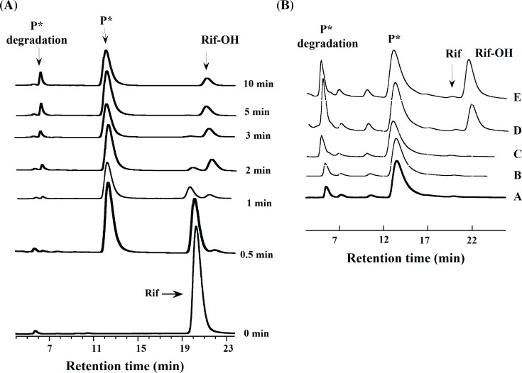 Time-dependent HPLC analysis of RifMO reactions. (A) Stacked chromatograms showing time traces for the elution of the Rif peak (21.2 min), P* (13.4 min), Rif-OH (22.1 min), and the P* degradation compound (6.7 min). (B) Stacked chromatograms show P* (A) extracted in 100 mM sodium phosphate buffer, pH 7.5, incubated with: (B) NADPH, (C) RifMO, (D, E) NADPH and RifMO, for 5, and 20 min., respectively.