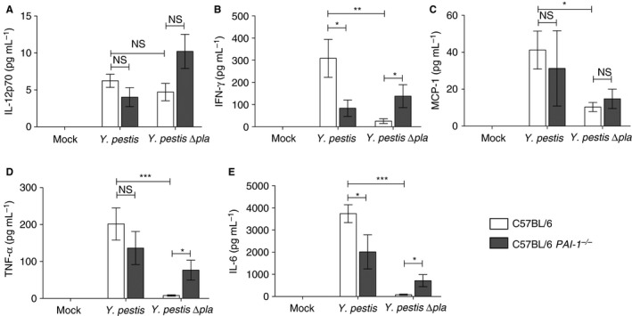 Plasminogen activator inhibitor‐1 ( PAI ‐1) regulates cytokine production during pneumonic plague. Forty‐eight hours after inoculation with phosphate‐buffered saline (mock), 10 4 colony‐forming units ( CFU s) of Yersinia pestis , or 10 4 CFU s of Y. pestis ∆ pla , the levels of the indicated cytokines present in the bronchoalveolar lavage fluid of C57 BL /6 or C57 BL /6 PAI ‐1 −/− mice were assessed by cytometric bead array. Data from two or three independent experiments are combined ( n = 10–15 for each group); error bars represent standard errors of the mean. One‐way anova with Bonferroni's multiple comparison test was used to determine significance (* P ≤ 0.05; ** P ≤ 0.01; *** P ≤ 0.001). IFN , interferon; IL , interleukin; MCP ‐1, monocyte <t>chemoattractant</t> <t>protein‐1;</t> NS, not significant; TNF , tumor necrosis factor.