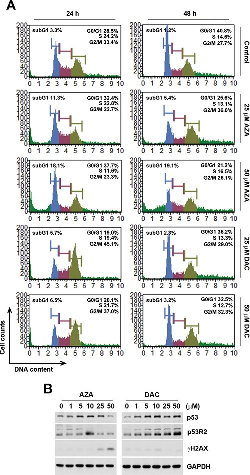 """Effects of azacytidine (AZA) and decitabine (DAC) on the cell cycle and p53 expression ( A ) HCT116 cells were treated the different doses of AZA or DAC for 24 and 48 h, and the cell cycle was analyzed by flow cytometry as described in """"Materials and Methods"""". ( B ) HCT116 cells were treated the different doses of AZA or DAC for 24 h, and whole-cell lysates were subjected to a Western blot analysis using antibodies against p53, p53R2, γH2AX, or GAPDH."""