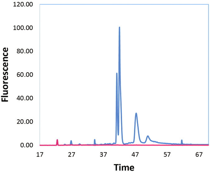 Bioanalyzer analysis of total RNA and bacterial mRNA-enriched samples from Drosophila ananassae colonized by its Wolbachia endosymbiont. The subtraction of Drosophila rRNA was assessed by running equivalent amounts of total RNA ( blue ) and Ribo-Zero reduced RNA ( pink ) on a Bioanalyzer. The software calculated the concentration of each sample by integrating the area under the rRNA peaks. Total RNA was 331 ng/μL and Ribo-Zero reduced RNA was 8 ng/μL, for an RNA loss of > 97%, most of which is in the rRNA peaks for both the bacterial endosymbiont and invertebrate host.