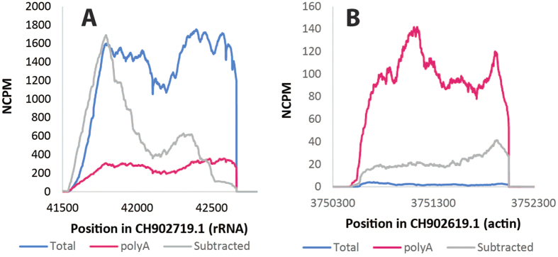 Depletion of Drosophila rRNA and actin transcripts. Coverage was compared for the Drosophila rRNA (panel A) and the actin gene (panel B) for the total (blue), polyA-selected (pink), and the bacterial mRNA-enriched (gray) RNA samples after normalizing for the number of reads sequenced, as calculated as NCPM, or n ormalized c overage p er m illion reads sequenced. rRNA is highly abundant in the total RNA, but significantly reduced in the polyA-selected and the bacterial mRNA-enriched samples. In contrast, the actin transcript was enriched only in the polyA-enriched sample. Therefore the method of bacterial mRNA enrichment was effective at removing both eukaryotic mRNA and rRNA.