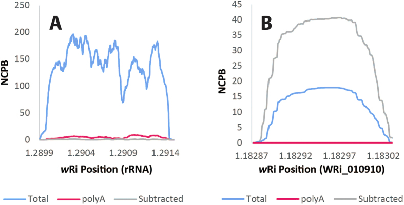Depletion of Wolbachia rRNA and enrichment of Wolbachia mRNA. Coverage was compared for the Wolbachia rRNA (panel A) and the WRi_010910 gene (panel B) for the total (blue), polyA-selected (pink), and bacterial mRNA-enriched (gray) samples after normalizing for the number of reads sequenced, as calculated as NCPB, or normalized coverage per billion reads sequenced. rRNA was highly abundant in the total RNA, but significantly reduced in the polyA-selected and the bacterial mRNA-enriched samples. In contrast, the WRi_010910 transcript was enriched in the bacterial mRNA-enriched sample compared to the total RNA. Therefore the method was effective at enriching for bacterial mRNA.
