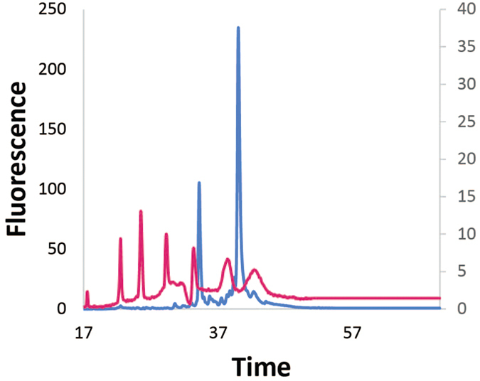 Bioanalyzer analysis of Ehrlichia and canine total RNA abundance. Using the Bioanalyzer, the Ehrlichia- canine total RNA (blue, left axis) was compared to the RNA 6000 ladder (pink, right axis), which contains 0.2, 0.5, 1.0, 2.0, 4.0, and 6.0 kbp fragments. Only canine rRNA was evident with no detectable bacterial rRNAs.