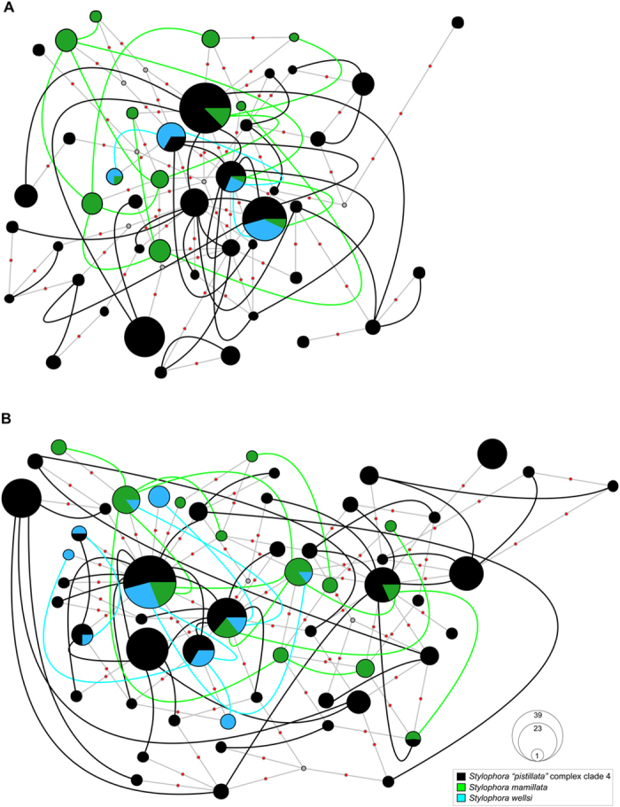 Haplowebs of Stylophora morphospecies belonging to clade 4 based on nuclear rDNA. ( A ) ITS1, ( B ) <t>ITS2.</t> Each circle represents a haplotype and its size is proportional to its total frequency. Coloured lines connect haplotypes of heterozygotes individuals and colours denote Stylophora morphospecies as indicated by the embedded key. Small grey circles represent missing haplotypes and small orange circles represent a single nucleotide change.