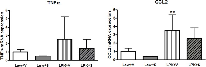 Effects of early initiation of sirolimus on NF-κB dependent proinflammatory gene expression ( TNFα and CCL2 ) in Study 2. The mRNA expression is shown as the target gene corrected for GAPDH, and expressed as a fold-change over Lewis+vehicle (V). Data are expressed as mean±SD; **p