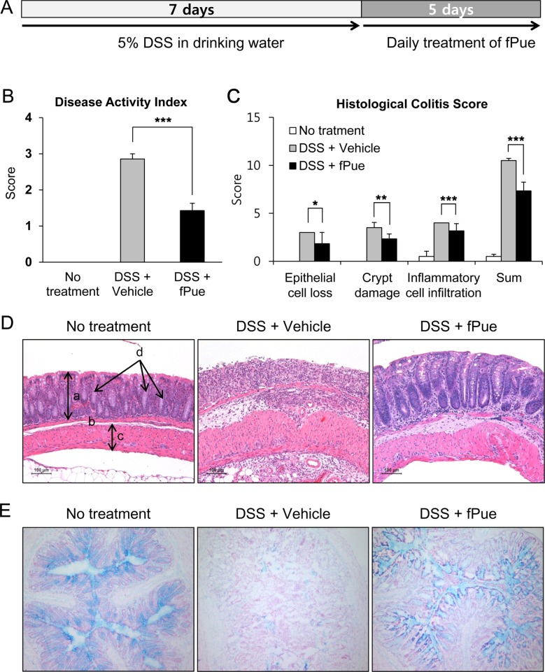 Effect of fPue on DSS-induced colitis in mice. A. Schedule for administration of 5% DSS and fPue. B. Assessment of disease activity index (DAI) by fecal analysis. C. Histological evaluation of DSS-induced colitis according to degree of epithelial cell loss, crypt damage, and infiltration of inflammatory cells. D. Histological figures of colon stained by H E. (a, mucosa; b, submucosa; c, muscularis; d, crypt) E. Histological figures to observe goblet cell loss by Alcian Blue staining. Numerical data were expressed as mean±standard deviation (n=7, * P