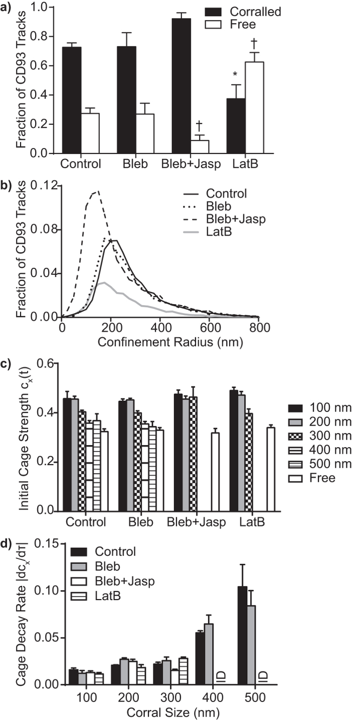 Cages are Structures Distinct from Actin-Based Corrals. The impact of actin stabilization (Jasplakinolide (Jasp) + Belbbistatin (Bleb)) and destabilization (Latrunculin B, LatB) were assessed on CD93 corralling and cage strength. ( a ) Effect of actin destabilization and stabilization on CD93 corralling. ( b ) Effect of actin stabilization and destabilization on the frequency and size of actin-based corrals, measured as fraction of total CD93 tracks. ( c ) Actin stabilization and destabilization do not affect cage strength at early lag times (τ = 0.1 s). ( d ) Rate of CD93 cage decay following stabilization or destabilization of the actin cytoskeleton. Data are expressed as mean ± SEM ( a,c,d ) or as mean ( b ) of 4 independent experiments. * , † p