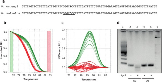 Genetic discrimination of O. volvulus and O. ochengi . a Sequence of the PCR 79-bp amplicon used to discriminate between O. volvulus and O. ochengi . Nucleotide differences between the two species are highlighted in bold, and the ApaI restriction site present in the O. volvulus sequence is underlined. b Normalised HRM melt curves from cloned positive control 79-bp products (pGem_Ov and pGem_Oo), adult O. volvulus and O. ochengi DNA, and 4 larvae samples from both species, each in duplicate. Curve colour of the larval samples is automatically determined based on the clustering of melt curves to the O. volvulus (green) and O. ochengi (red) adult samples. c The same samples are presented as in ( b ), showing HRM difference curves, which accentuate differences between the melt curve clusters in ( b ), normalised to the O. ochengi cluster. d Representative RFLP analysis of amplicons generated in the HRM assay for each species, showing digestion of the O. volvulus sequence, but not the O. ochengi sequence, with ApaI