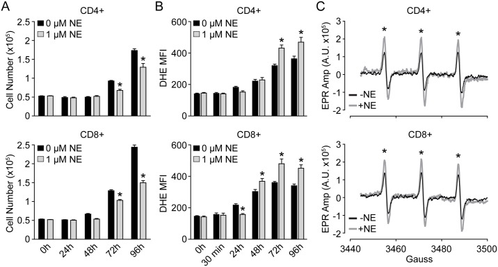 NE provokes inverse effects on T-lymphocyte growth and O 2 ●- levels. T-lymphocytes were isolated, purified, and activated via CD3/CD28 stimulation in the presence of 1 μM NE. A . T-lymphocyte growth curves at various time points of ex vivo culture. N = 4. B . Quantification of DHE oxidation in CD4+ and CD8+ T-lymphocytes at various time points post-activation. N = 4. C . Representative EPR spectra showing amplitude (Amp) for T-lymphocytes stimulated in the presence or absence of 1 μM NE for 96 hours. N = 3. *p