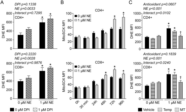 Mitochondrial O 2 ●- is increased in T-lymphocytes treated with NE. T-lymphocytes were isolated, purified, and activated via CD3/CD28 stimulation in the presence of 1 μM NE. A . Quantification of DHE oxidation in CD4+ and CD8+ T-lymphocytes 96 hours post-activation. Cells were incubated with DPI 1 hour prior to and during the incubation with DHE. N = 3. *p