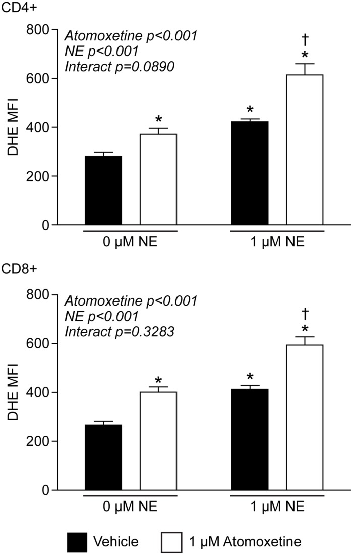 Inhibiting NE transport increases intracellular O 2 ●- levels. T-lymphocytes were isolated, purified, and activated via CD3/CD28 stimulation in the presence of NE and/or the norepinephrine transporter inhibitor atomoxetine. Quantification of DHE oxidation in CD4+ (upper) and CD8+ (lower) T-lymphocytes 96 hours post-activation. N = 4. *p