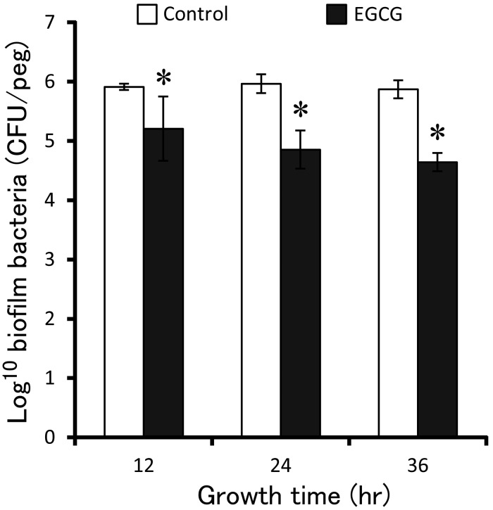 Inhibitory effect of EGCG on biofilm formation. The pegs inserted into 10 7 CFU/m l planktonic cultures that had added final concentration of 0.2 mg/m l of EGCG to incubate for 12, 24 and 36 hr to form biofilm, respectively. The bacteria were moved from biofilm of pegs and seeded on agar plate to count and analyzed by t -test. Standard deviations indicated by error bars were calculated from 3 independent experiments. * Significantly different from the untreated controls (* P