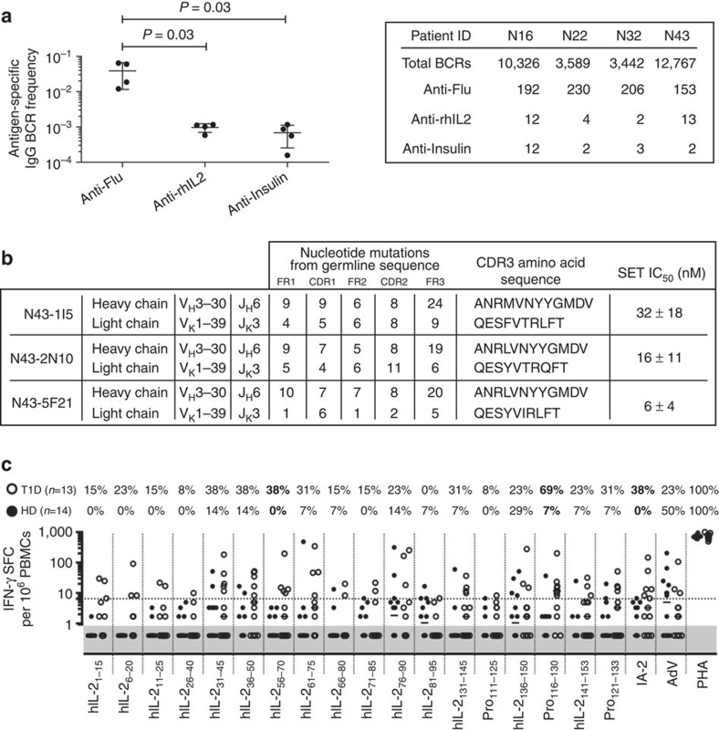 Circulating anti-IL-2-specific B and T lymphocytes in T1D patients. ( a ) (Left) Relative frequency and (right) absolute numbers of antigen-specific IgG memory B cells across four T1D patients. Error bars represent s.d., P -values calculated using an unpaired t -test. ( b ) IL-2-specific heavy and light chain V gene segment usage, CDR3 amino acid sequences, and rhIL-2 solution equilibrium titration (SET) affinity for recombinant IgG obtained from a single T1D patient, ( c ) IFN-γ production by peripheral blood mononuclear cells (PBMCs) from healthy donors (HD) ( n =14, closed circles) or T1D patients ( n =13, open circles) quantified by ELISPOT after stimulation with rhIL-2 (Proleukin, Pro) or Pro peptides (10 μM per each), intracellular IA-2, adenovirus lysate (AdV), or PHA. The number of IFN-γ spot-forming cells (SFC)/10 6 PBMCs is depicted, the dashed line indicates the positive cut-off threshold, and the grey shaded area shows undetectable responses (that is, identical to spontaneous background responses; see material and methods for threshold determination). The percent of positive T1D (top number) and HD (bottom number) is indicated for each condition, with antigens yielding responses significantly different between HD and T1D patients in bold ( P