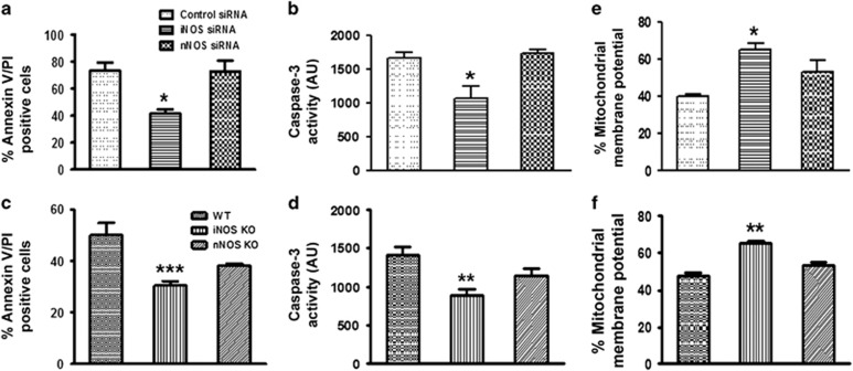 Role of <t>iNOS</t> in neutrophil apoptosis. ( a ) Neutrophil apoptosis was measured by Annexin V-PI labelling in scrambled, iNOS and <t>nNOS</t> silenced human PMNs after 12 h of incubation ( N =5). ( b ) Caspase-3 activity assay was performed in scrambled, iNOS and nNOS silenced human PMNs ( N =3). ( c ) Annexin V-PI labelling of BMDN from WT, iNOS and nNOS KO mice after 18 h of in vitro culture ( N =5). ( d ) Caspase-3 activity was monitored in BMDN from WT, iNOS and nNOS KO mice using caspase-3 specific fluorogenic substrate acetyl-Asp-Glu-Val-Asp-7-amino-4 methylcoumarin (150 μ M; N =5). Mitochondrial membrane potential in control and iNOS silenced human PMNs ( e ) and WT and iNOS KO BMDN ( f ) ( N =5).Data represent mean±S.E.M. of three to five independent experiments. * P